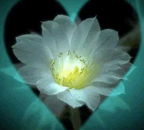 Shamans World Heart Llike Flower